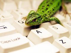 Curious sand lizard (Lacerta agilis) sitting on a keyboard - stock photo