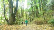 Stock Video Footage of Man in Green Forest Walking Up Path