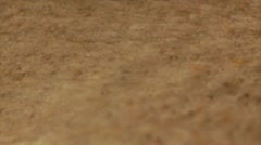 Fossil under sand Stock Footage