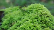 Stock Video Footage of Grasshopper on the moss in forest
