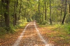 Stock Photo of autumn trail