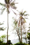 Tropical forest at Con Dao island in Vietnam. - stock photo