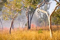 Bush fire in outback australia Stock Photos