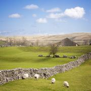 Yorkshire dales with dry stone wall Stock Photos