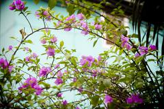 Stock Photo of Saigon in Vietnam. Vietnamese culture,flowers.