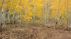 Sports recreation 4x4 vehicle down trail golden autumn color HD 3313 Stock Footage