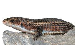 Reptile animal lizard Stock Photos