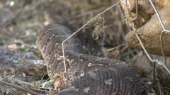 Moving snake Stock Footage