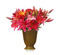 lily bouquet isolated on white background - stock photo