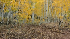 4x4 sport recreation vehicle mountain trail HD 3315 Stock Footage