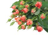 Stock Photo of small red roses