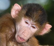 Animal monkey Kuvituskuvat
