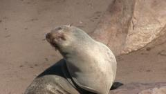 Seal in the sun (2) Stock Footage