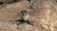 Seal on a rock Stock Footage