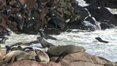 Seals (2) - stock footage