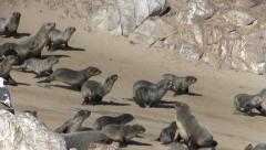 Seals (3) Stock Footage