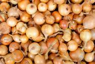 Stock Photo of raw ripe onions