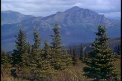 Denali National Park, Alaska, wide shot, scenery, pines, mountains Stock Footage
