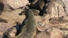 Seals - stock footage