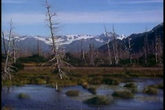 Scenery of Portage, Alaska, mountains, swampy fields, dead trees Stock Footage