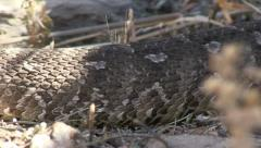 Snake skin, extreme close up Stock Footage