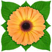 one orange flower with green leaf - stock photo