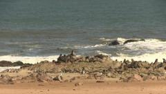 Waves and seal colony Stock Footage