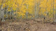 Mountain trail golden Aspen trees autumn HD 3313 Stock Footage