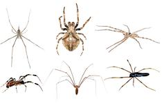 spider set collection - stock photo