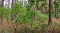Flight round a green bush. Steadycam shot. HD Footage