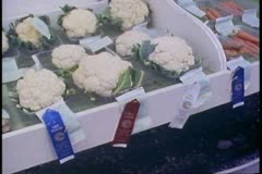 Alaska State Fair, cauliflower display with ribbons, Palmer, Alaska Stock Footage