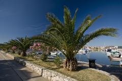 Palm-puita Bibinje ranta Kuvituskuvat