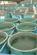 Stock Photo of agriculture aquaculture farm