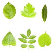 Collection of green tree leaves - stock photo