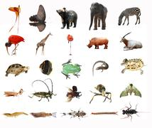 wild animal collection isolated - stock photo