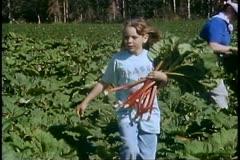 Matanuska Valley, Alaska, close up girl walking with rhubarb Stock Footage