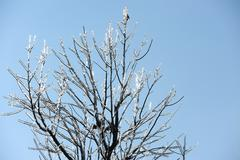icy tree branches - stock photo