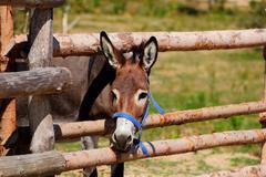 Curious donkey Stock Photos