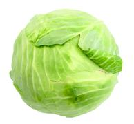 single green cabbage with dew - stock photo