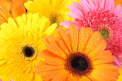 Background of flowers Stock Photos