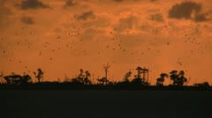 Dry Tortugas Sunrise 0003 Stock Footage
