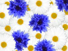 background of blue and white flowers - stock photo