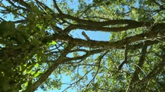 Sun through tree pan Stock Footage