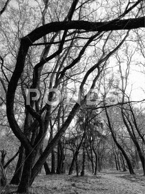 Stock photo of trees - March