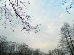branches April - stock photo