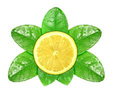 lemon fruit on green leaf with dew - stock photo