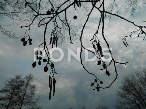 Stock photo of branches sky