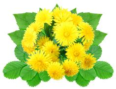 Bouquet of yellow flowers Stock Photos