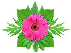 purple flower with green leaf - stock photo
