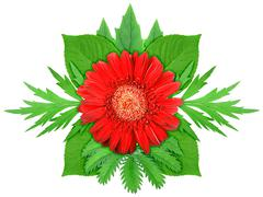 red flower with green leaf - stock photo